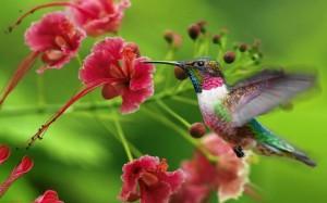 colibrì dell'uovo di struzzo intagliato